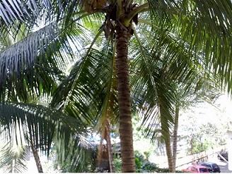 Green Mumbai