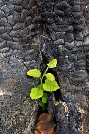 Resilience in Adversity