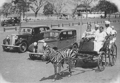 Zebra Carriage in Kolkata