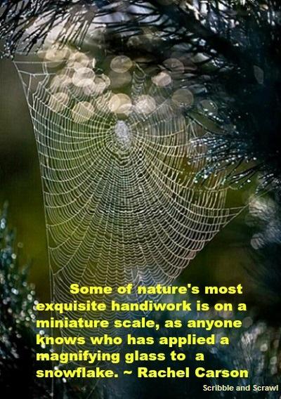Designs of Nature quote