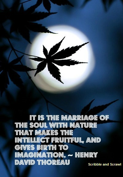 Nature and Imagination quote
