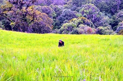 Siroy Hills, Manipur