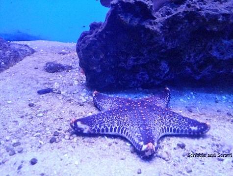 Marine Fish Aquarium , Goa