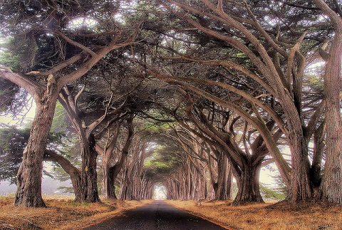 Tree Tunnel
