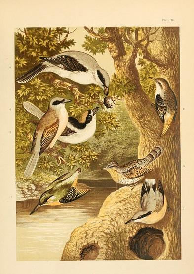 Kingfisher Nest