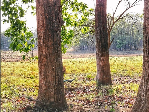 Kanha : A jungle safari in the forest of Mowgli- Part 2